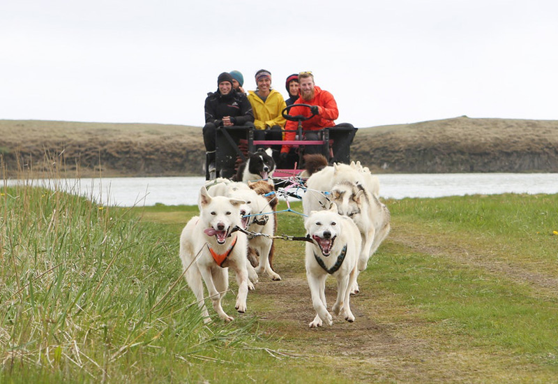 dogsledding Island